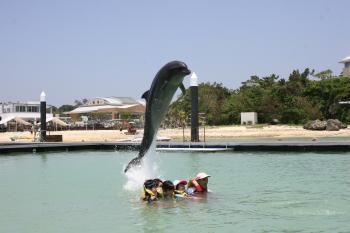 ブログ用沖縄2イルカ2