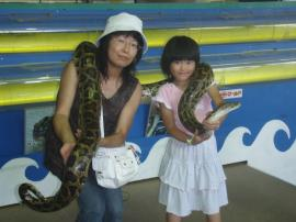 ブログ用沖縄2蛇