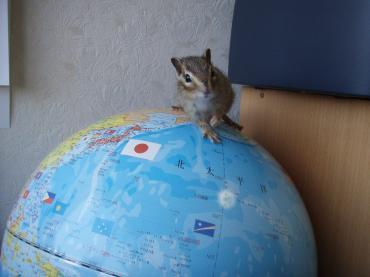 ブログ用ココ地球儀