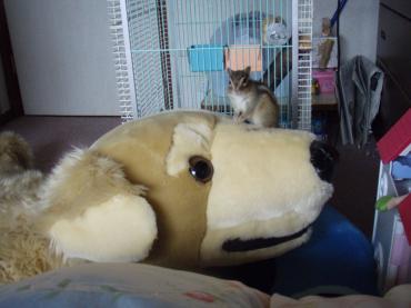 ブログ用ココとデカ犬