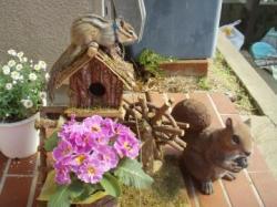 ブログ用ココと植木ハウス