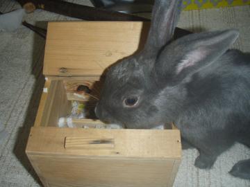 ブログ用巣箱を覗くメロ
