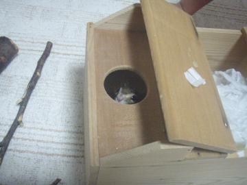ブログ用巣箱の中からこんにちは