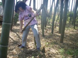 ブログ用竹の子堀
