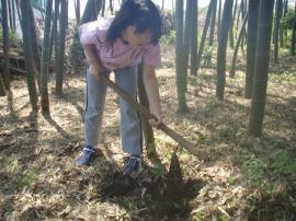 ブログ用竹の子堀2