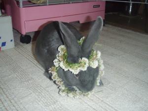 ブログ用メロの花飾り