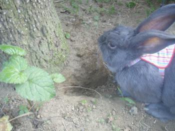 ブログ用メロお庭で堀り堀り