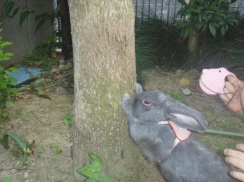 ブログ用メロお庭の木の下で