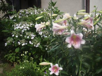 ブログ用庭の花