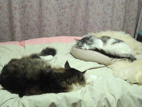 ティム&じゅり寝んねちゅ