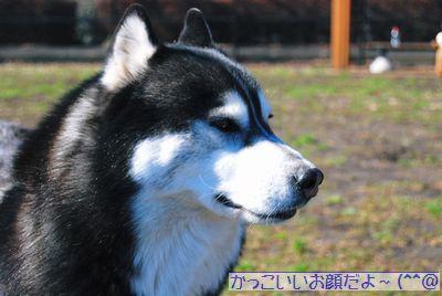 イケメン★アンディくん