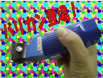 CIMG2825 (1)