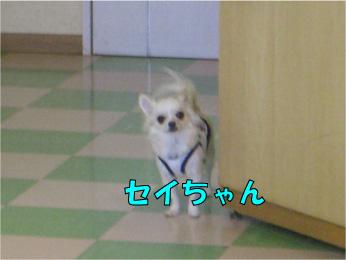 CIMG2809.jpg