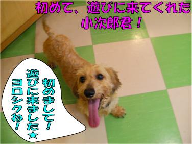 SANY0332.jpg