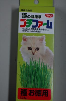 猫草その2