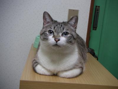 靴箱の上で待つわいん