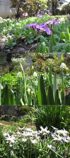 庭の花たち.jpg