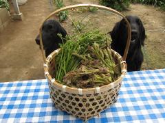 2010 05 17 今日の収穫.JPG