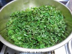 2011 05 18 木の芽の若芽.jpg