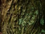 樹皮模様-08D 0805qc