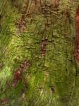 樹皮模様-09D 0805qc