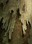 樹皮模様-25D 0904qtc