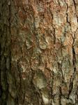 樹皮模様-31D 0904qc