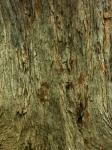 樹皮模様-33D 0904qc