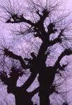 4.樹木-04Pqt