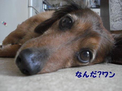 暑い~~らしい(^w^)ププッ