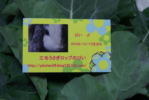 DSC07777_convert_20111204130811.jpg
