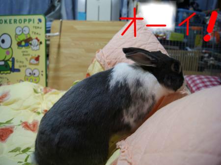 snap_wankosyoukai_2011103185810.jpg