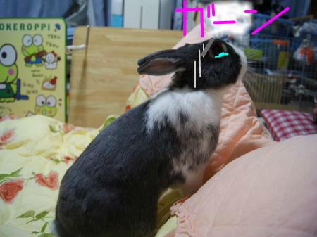 snap_wankosyoukai_201110319451.jpg