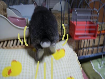 snap_wankosyoukai_201142172931.jpg