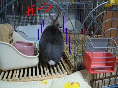 snap_wankosyoukai_201142173122.jpg