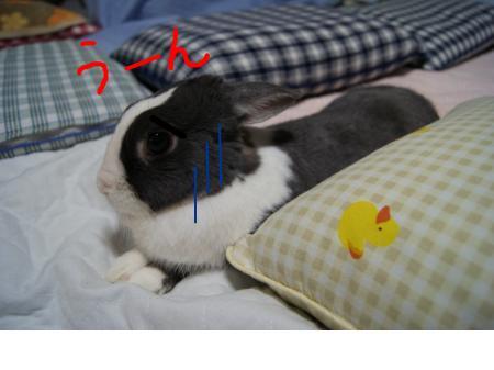 snap_wankosyoukai_20114454328.jpg