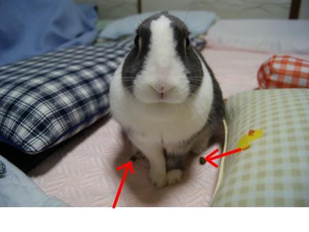 snap_wankosyoukai_20114454945.jpg