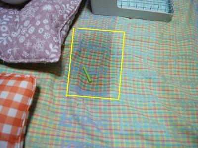 snap_wankosyoukai_20115121011.jpg