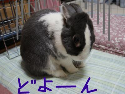 snap_wankosyoukai_201154223823.jpg