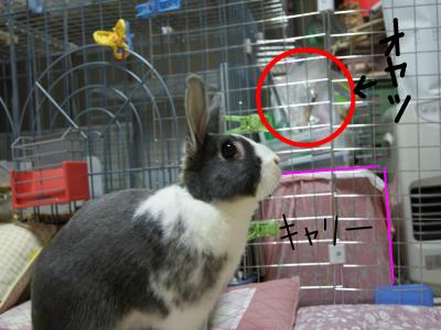 snap_wankosyoukai_201181102215.jpg