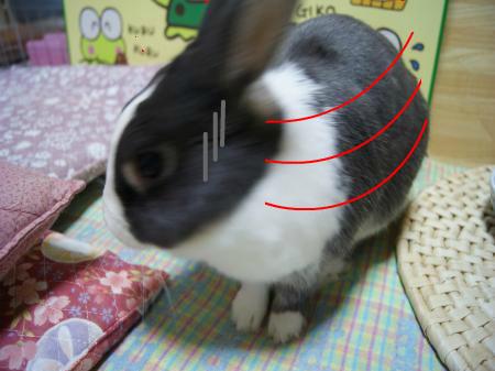 snap_wankosyoukai_20119412326.jpg