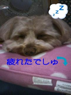 0002_convert_20090810194253.jpg