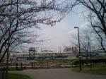 竹下駅裏(博多運転区)に佇むブルートレインと桜