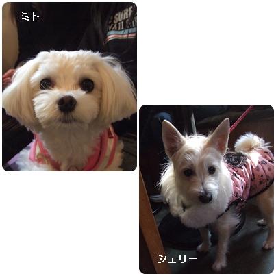 1-29-3.jpg