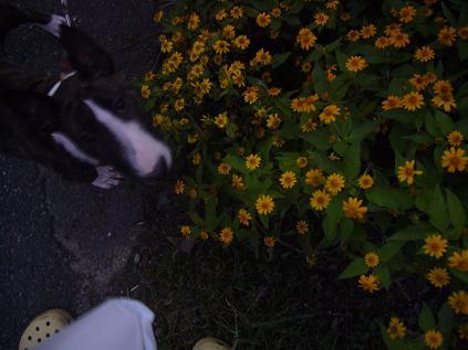 ブリコと花