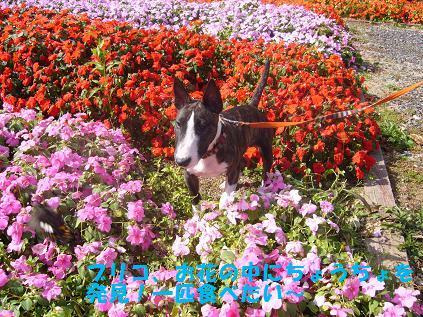 お花とブリコ