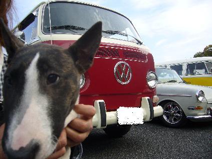 ブリコと車