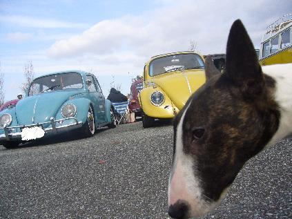 車とブリコ