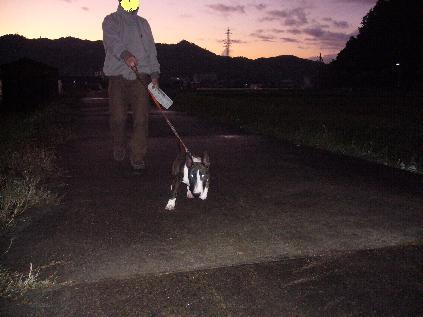 夕方のお散歩!!