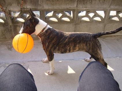 空気の抜けたボール